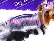 Салон & зоомагазин для животных Dog House в Калуге Салон & зоомагазин для жи