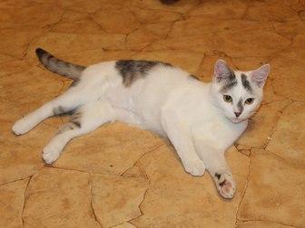 Смотреть фото Отдам даром - приму в дар Симпатичный юный котик Болтик, в добрые руки 66515076 в Калуге