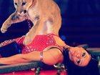 Фото в Развлечения и досуг Цирк Впервые в Камышине! ! !   Цирк шапито Граф в Камышине 300