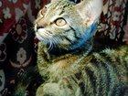 Фото в Кошки и котята Продажа кошек и котят Девочка, 4 месяца, здоровье отличное. Кушает в Казани 0