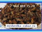 Фото в Красота и здоровье Услуги народной медицины Акция! ! ! Цена - 500 рублей за курс! ! ! в Казани 0