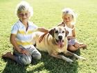 Увидеть фото  Дрессировка собак в группе на площадке в г, Набережные Челны, 39124735 в Набережных Челнах