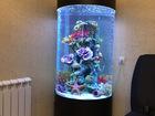 Скачать бесплатно foto Аквариумы Шикарный аквариум Marvelous с большим цилиндром 43038670 в Казани