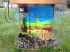 Изображение в   Смотровое стекло и боковые стекла аквариумов в Кемерово 3700