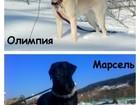 Фотки и картинки  смотреть в Новокузнецке