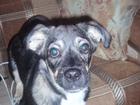 Фото в Собаки и щенки Продажа собак, щенков Отдам щенка в хорошие руки в связи с переездом в Кемерово 0