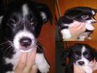 Изображение в Собаки и щенки Продажа собак, щенков Срочно! ! Малишкам (троим) 2 месяца. Имеют в Киеве 0