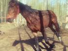 Просмотреть фотографию Разные услуги Верховая езда на лошадях и пони, Кинешма 36554707 в Кинешме