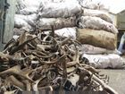 Изображение в   куплю рога лося в кирове и кировской обл, в Кирове 320