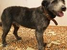 Фотография в   Найдена собака в Коломенском районе! Молодой в Коломне 0