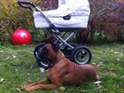 Скачать фото  Срочно продаю детскую коляску Peg-perego 33024664 в Королеве