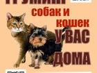Уникальное фото  Груминг собак и кошек у Вас дома 39226653 в Королеве