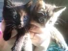 Скачать бесплатно foto Отдам даром - приму в дар Отдадим в ваши заботливые руки прекрасных котят 39689664 в Королеве