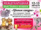 Уникальное фото  Международная выставка кошек 12-13 августа 39889394 в Королеве