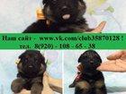 Фотография в Собаки и щенки Продажа собак, щенков Продам недорого чистокровных крупных щенков в Костроме 6000