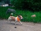 Увидеть изображение Найденные пропала собака 38911955 в Костроме
