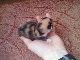 Свежее изображение Отдам даром пасхальные котята 32622761 в Костроме