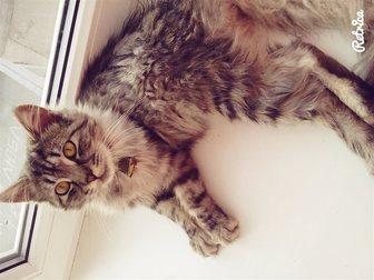 Скачать бесплатно фото Отдам даром Отдадим кота в хорошие руки 33110948 в Костроме