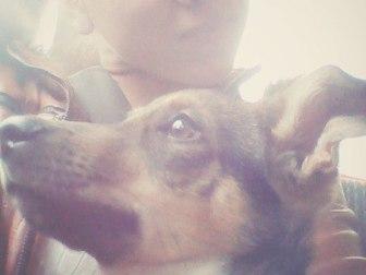 Просмотреть фотографию Отдам даром - приму в дар Отдам собачку 37361065 в Костроме