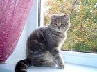 Новое фото  Продам чудесную ласковую кошечку 32306543 в Краснодаре