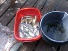 Фотография в   Доброго времени суток всем рыболовам и посетителям в Краснодаре 0