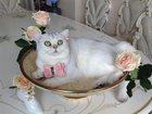 Foto в Кошки и котята Вязка Замурчательный, ласковый мальчик, 10 месяцев, в Краснодаре 0