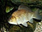 Изображение в   Вас приветствует база отдыха с рыбалкой Золотой в Краснодаре 300
