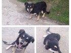 Фотография в   Добрый день! Найдена собака (девочка), район в Краснодаре 10