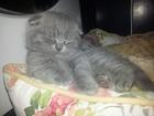 Изображение в Кошки и котята Продажа кошек и котят Отдадим в хорошие руки красивого котёнка! в Краснодаре 2000