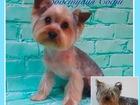 Просмотреть изображение Стрижка собак Стрижка собак, Профессиональный уход, 63408540 в Краснодаре