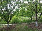 Смотреть фотографию  Продам земельный участок 10 соток сад 65836775 в Новороссийске