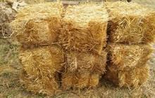 Солома пшеницы в тюках(брикетах), Краснодар