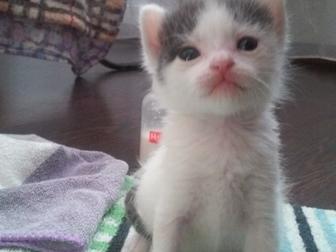 Свежее фотографию Отдам даром - приму в дар Отдам в хорошие руки котят! 38898817 в Краснодаре