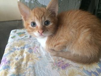 Свежее изображение Отдам даром - приму в дар Отдам котят в добрые руки, рыжие игривые, здоровые 66349686 в Краснодаре