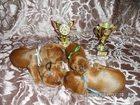 Скачать бесплатно фотографию  продам щенков сеттера 32436716 в Красноярске