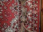 Фото в Хобби и увлечения Охота Продам рога оленя, не обработанные. Отличная в Красноярске 5000