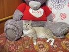 Свежее фотографию Вязка Нужна кошка, 34664980 в Красноярске