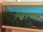 Изображение в   Размеры аквариума: 51х86х36 (в/д/ш)см. Тумба:высота в Красноярске 4000