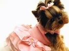Новое фото Услуги для животных Стрижка ( груминг) декоративных собак Йорк, Шитцу, Мальтези, Шпиц, Пудель 37444690 в Красноярске