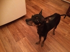 Фото в Отдам даром - Приму в дар Отдам даром в районе остановки Юбилейная найдена собака в Красноярске 0