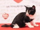 Смотреть фотографию Отдам даром Отдам хорошенького котенка 37687041 в Красноярске