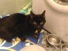 Кот Черныш ищет дом и самого лучшего хозяина