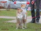 Фотки и картинки  смотреть в Красноярске