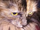 Скачать бесплатно foto  Ищем хорошего котика для вязки с очень хорошей девчонкой 66516703 в Красноярске