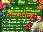 Уникальное изображение  Саженцы плодовых, ягодных и декоративных культур 69542115 в Красноярске