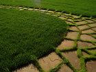 Увидеть изображение  Посев газона, Укладка рулонного газона, 82379043 в Красноярске