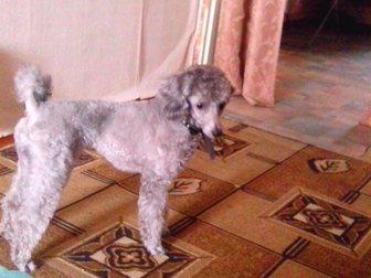 Бесплатное объявление красноярск собаки вязка дать бесплатное объявление на сайте продажа автомобиля