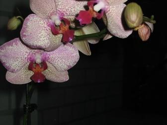 Просмотреть фото Мебель для прихожей цветы комнатные: спатифиллум, калерия, фикус, щучий хвост итд, 35077711 в Красноярске