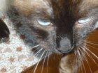 Фотография в Кошки и котята Продажа кошек и котят СРОЧНО В СВЯЗИ С ОТЬЕЗДОМ ОТДАМ В ДОБРЫЕ в Кропоткине 1000