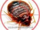 Изображение в   Уничтожение мукоедов, муравьев, тараканов, в Москве 1500